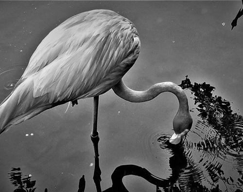 Honorable Mention <br />(Photography & Digital) <br />Ricardo Jose Gonzalez-Rothi