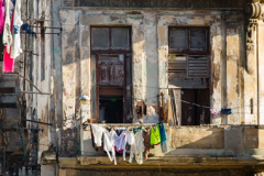 1st-Place-BIS-42-dp.-Paul-M.-Murray-Havana-Living-1-.b