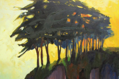 """Cypress in the Sun"""
