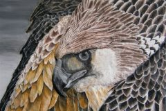 """""""Alertness of the Crowned Eagle 4mp"""""""
