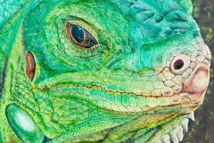 """""""Life And Patience of the Green Iguana"""""""