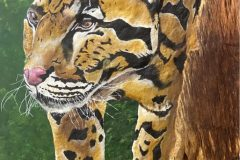 """""""Shyness of Clouded Leopard"""""""