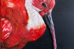 """""""Scarlet Red Ibis in the Nature"""""""