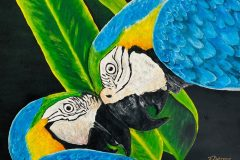 """""""Love of Amazon Gold-blue Macaw couple"""""""