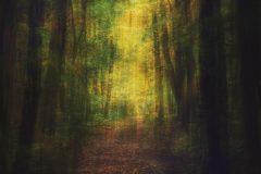 """In The Dark Dark Woods"""
