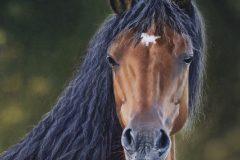 """New Forest Pony"""