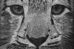 """""""Snow Leopard Pup"""""""