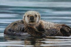 """""""A Love Like No Otter"""""""