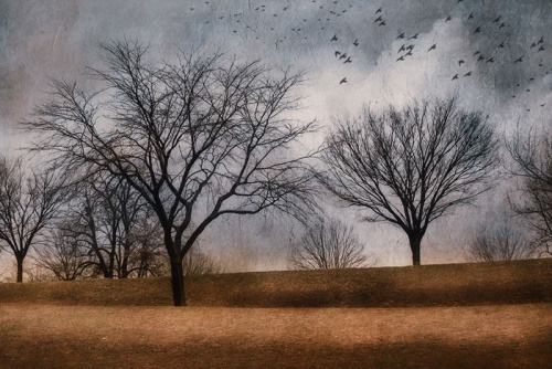 4th Place <br />(Photography & Digital) <br /> Shelley Benjamin