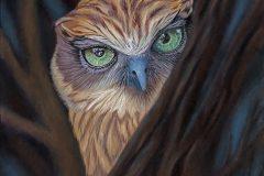 """""""Peek A BooBook Owl"""""""