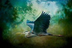 """""""Bird in Flight"""""""