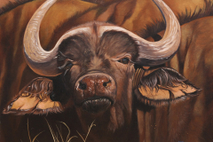 """African buffalo"""
